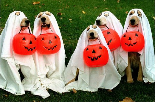 trick-or-treat-dogs-pams-vas